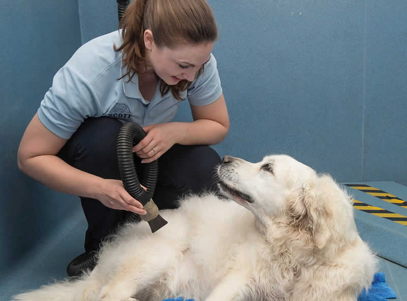 happy dog having blowdry and looking at nurse