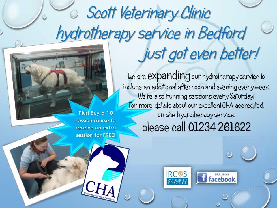 Scott Vets hydrotherapy Bedfordshire