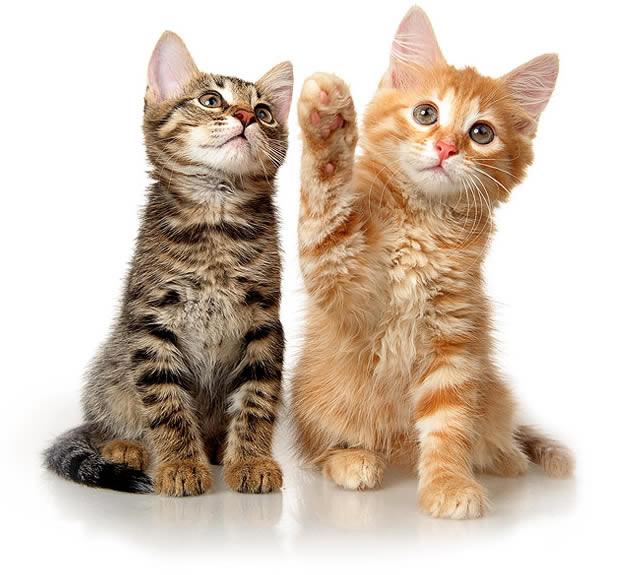 kittens Scott Vets