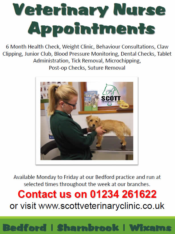 vet nurse appts at Scott Vets