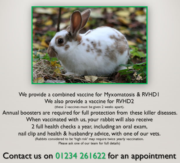 Rabbit vaccinations at Scott vets