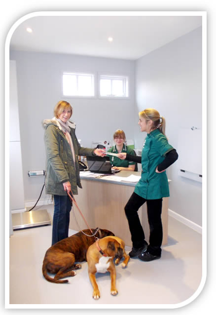 Reception with boxer dogs and vet nurses Wixam Scott Veterinary Clinics