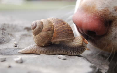 dog's nose and snail