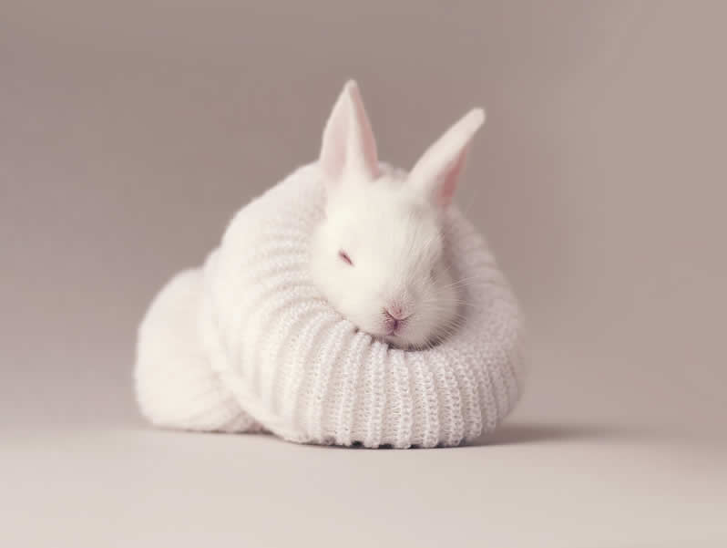 Baby rabbit keeping warm in hat