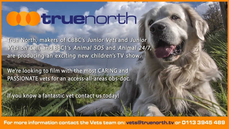 dog advert for True North