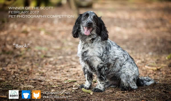 Sprocker of Scott Vets Photography competition
