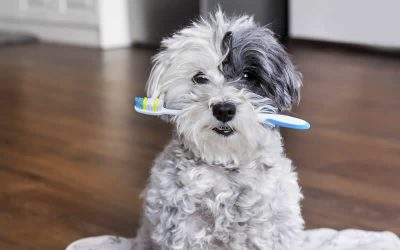 Have you ever cleaned your pets teeth?