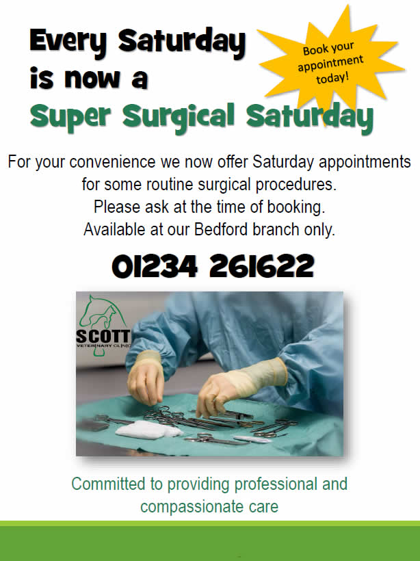 Super surgical Saturdays at Scott Vets