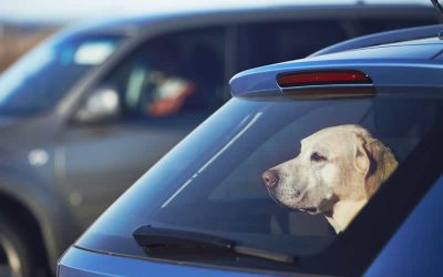 Government issues guidance on pet travel after Brexit